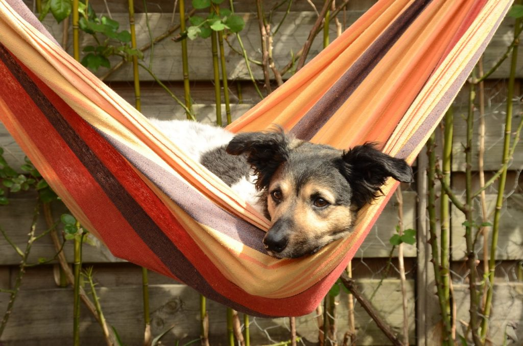 hund i hangmatta